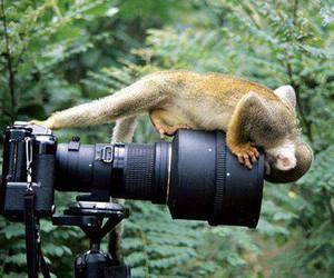 monkey, animal, and camera image
