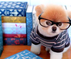 boo, cute animals, and dogs image