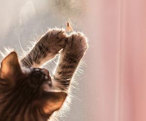 amazing, kitten, and animal image