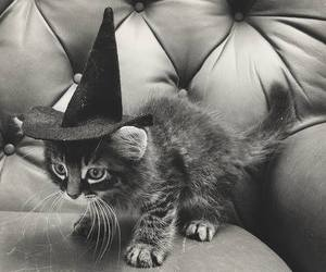 black and white, Halloween, and wizard image