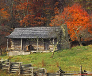 autumn, country, and trees image