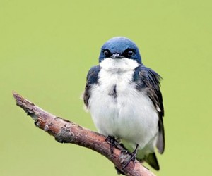 angry, animal, and bird image