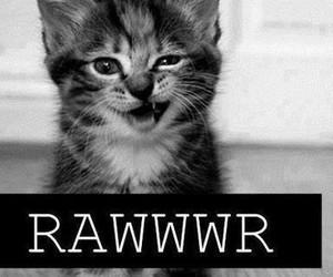 cat, rawwwr, and kitten image