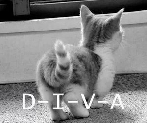 back, cat, and diva image