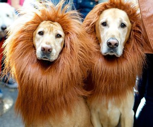 animal, dog, and lion image