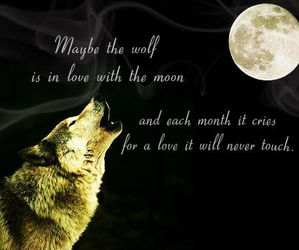 wolf, alone, and black image