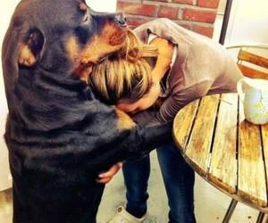 dog, friends, and hug image