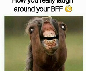 funny, laugh, and bff image