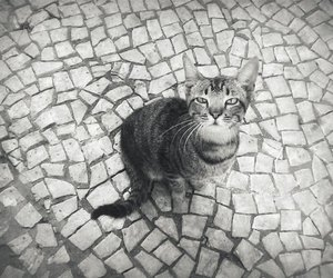 black & white, cat, and street image