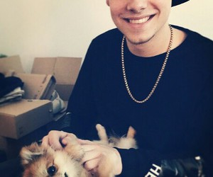 taddl, cute, and dog image