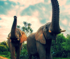 elefant, family, and foto image