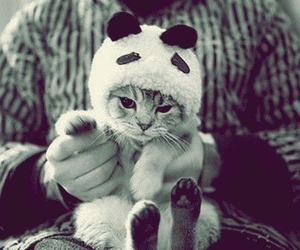 cat, cute, and panda image