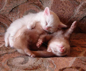 adorable, cat, and animal image