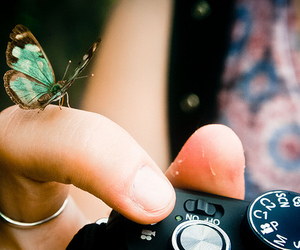 butterfly, camera, and lovely image