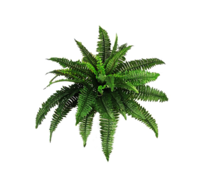 plants, overlay, and png image