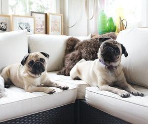 dog, animal, and pug image