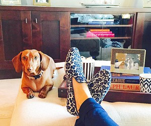 dachshund, preppy, and leopard loafers image