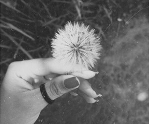 black and white, flowers, and nails image