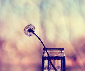 flowers, dandelion, and believe image