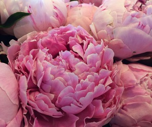 bloom, lovely, and flower image