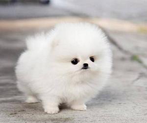 dog, animal, and white image