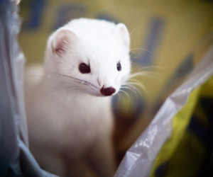 beauty, draco malfoy, and ferret image