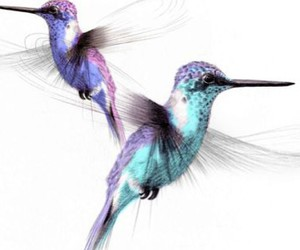 humming birds, watercolour, and lollilu image