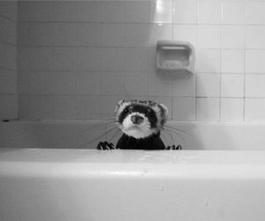 adorable, bath, and bathtub image