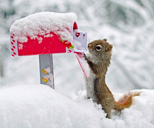 squirrel, snow, and winter image