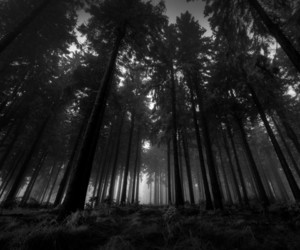 dark, forest, and nature image