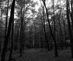 forest, foret, and photographe image