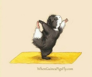 fitness and guinea pig image