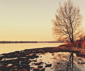nature, sunset, and tree image