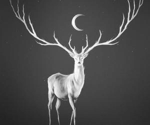 moon, deer, and animal image
