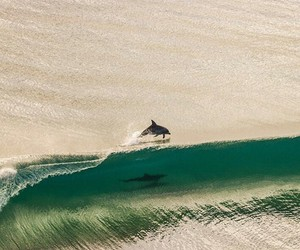 animals, awesome, and dolphin image