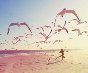 beach, bird, and summer image