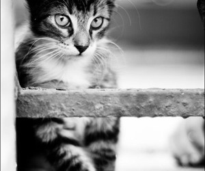 black and white, cats, and cute animals image