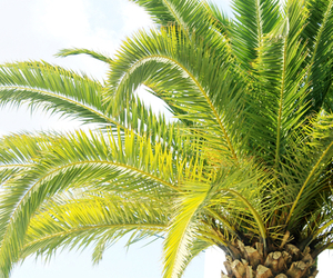 palm trees and green image