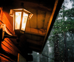 rain, light, and autumn image
