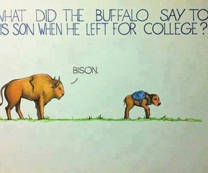 funny, lol, and bison image