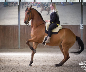 equestrian, horse riding, and horse image