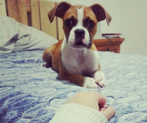baby, beauty, and boxer image