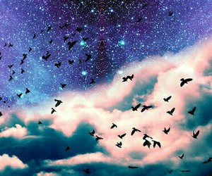 bird, sky, and galaxy image