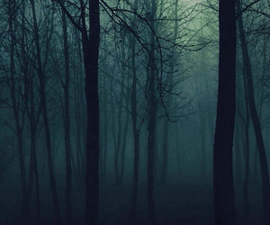 forest, wallpaper, and trees image