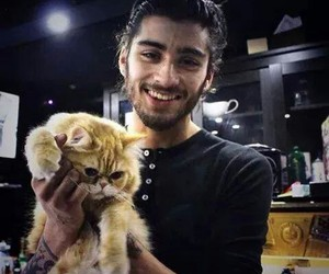 cat, 1d, and one direction image