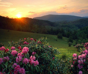 beautiful, nature, and flowers image