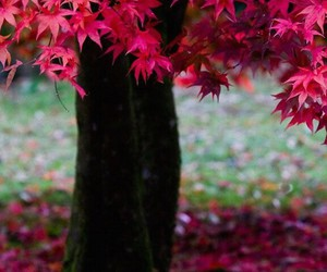tree, pink, and autumn image