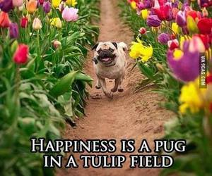 happiness, pug, and cute image