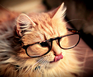 kitty, sweet, and nerd image
