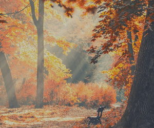autumn, favorito, and paisaje image